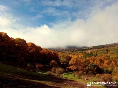 Castañar de El Tiemblo - Pozo de la Nieve - Castañar, Robledal, senderismo otoño